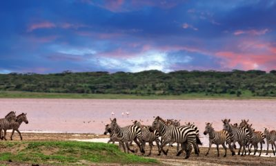 10 Things You Need to Know About a Serengeti Safari