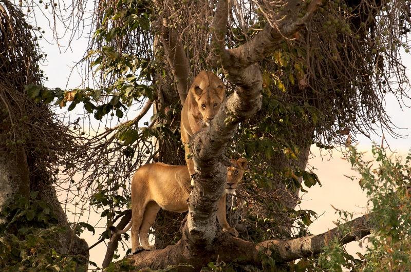 safari-tanzania-mainland