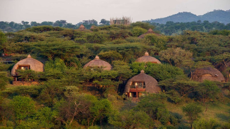 serengeti-serena-safari-lodge