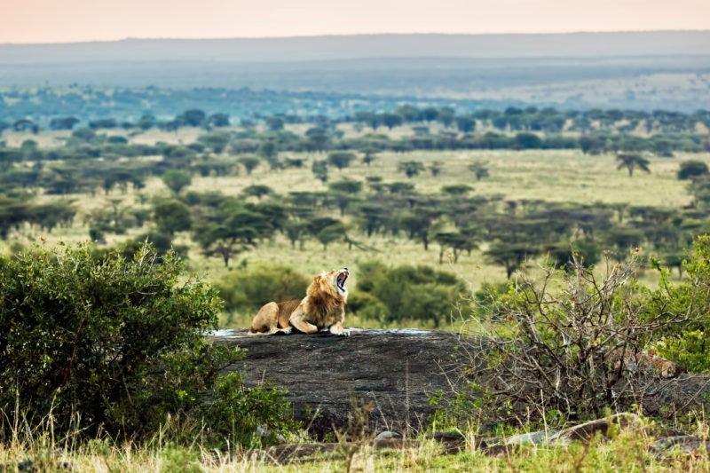 serengeti-tanzania-lion