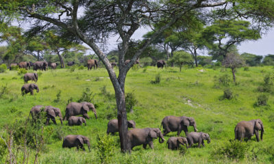 When is the Best Time to Visit Tarangire National Park?
