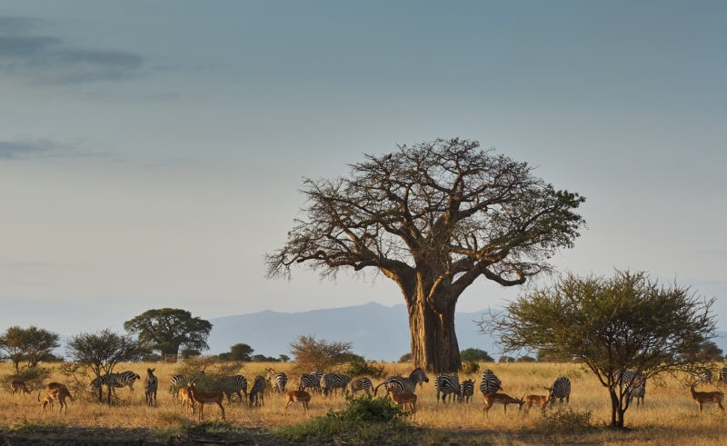tarangire-tanzania-park