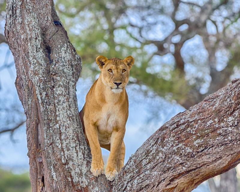tarangire-tanzania-travel
