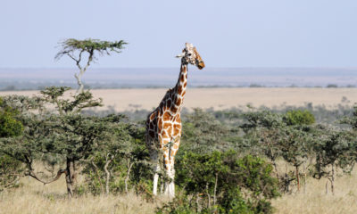 5 Insider Tips for Planning a Budget Safari in Tanzania