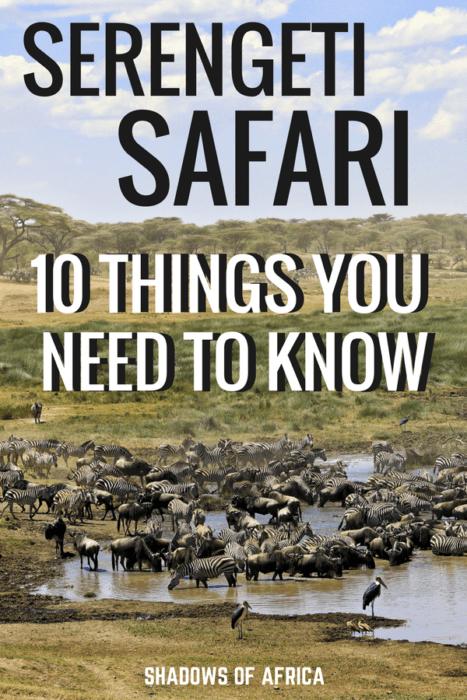 What you need to know before you plan your Serengeti Safari! The ultimate tips for planning a safari in Tanzania. Here's your ultimate African safari advice! #Serengeti #Tanzania #safari #Africa #travel