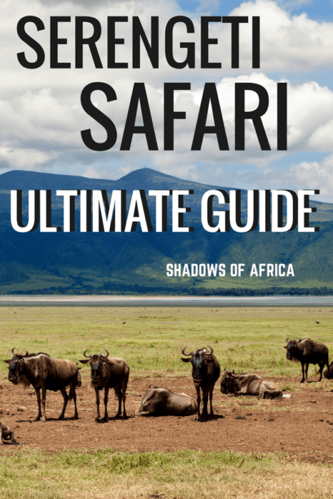 verything you need to know about your Serengeti Safari in Tanzania. The ultimate Africa safari tips. Plan your Tanzanian safari! #safari #travel #africa #tanzania