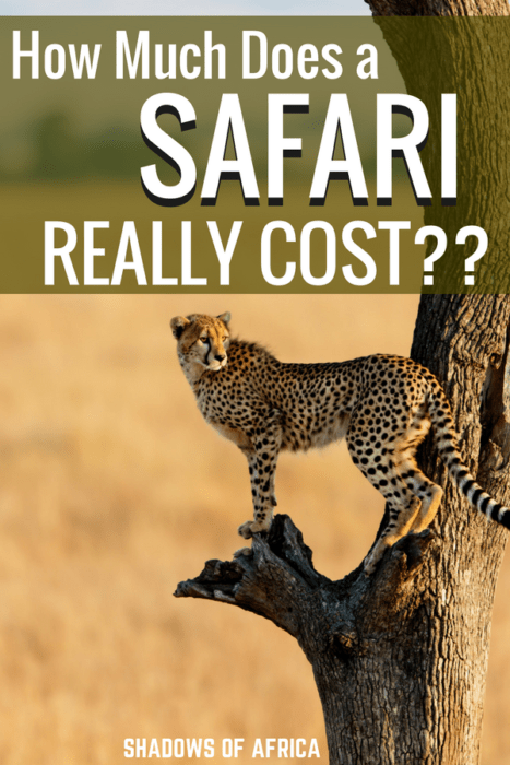 How much does a safari in Tanzania really cost? Here's a guide to safari pricing so you can budget for your African safari trip! #safari #budgettravel #Tanzania #Africa #travel