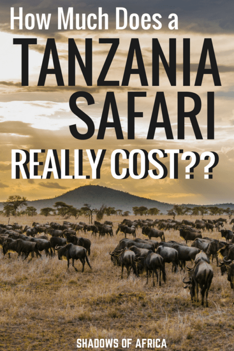 How much does it really cost to plan a safari in Tanzania? Safari travel doesn't have to be expensive. Here's how much money you should save for your ultimate African safari! #Tanzania #Africa #safari #travelbudget #travel