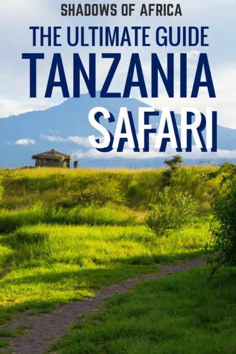 Do you dream of going on a safari? Here's the Ultimate Guide to planning your affordable (or luxury) safari in Tanzania! From safari routes and itineraries to lodges and tented camps, exploring the Serengeti or Ngorongoro and everything in between! #safari #tanzania #africa #travel