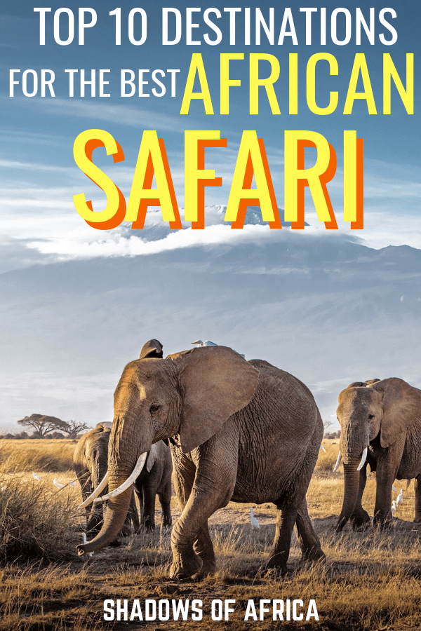Looking for the perfect destination for an African Safari? From Tanzania and Kenya to South Africa, here are the places you need to visit on your Africa safari trip itinerary! #safari #africa #tanzania #kenya #southafrica #travel