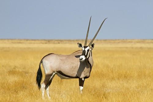 namibia-safari