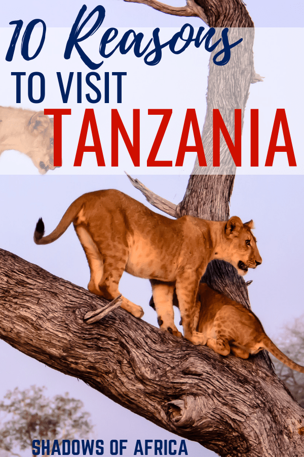 There are so many incredible things to do in Tanzania! From a Serengeti safari to climbing Mt. Kilimanjaro. Here's why you should visit Tanzania! #travel #Tanzania #Africa #safari