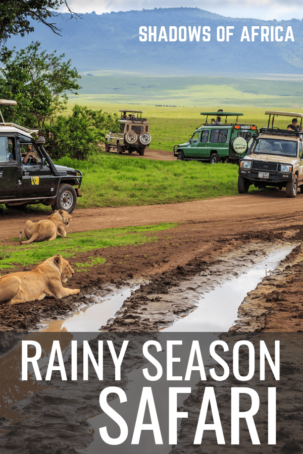 Want to plan an East African safari during rainy season? Here's how to get the most out of your low season safari during April and May. Is the rain really that bad for a safari trip? Is this a good time to do a budget safari? Here's your ultimate guide to planning a safari during rainy season #safari #africa #tanzania #kenya #rainyseason #itinerary #travel