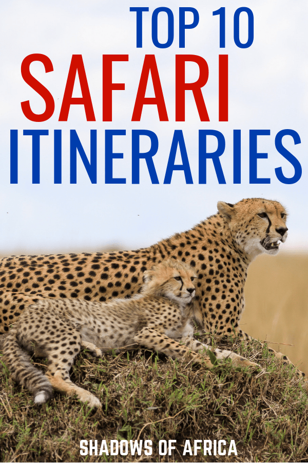 Do you want to go on an African safari adventure? Here are the best safari itineraries for your African safari trip. Plan your safari today! #safari #africa #tanzania #kenya #travel