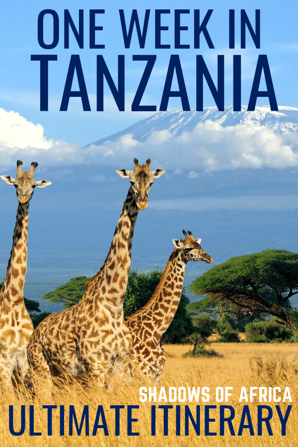Are you wondering what to do in Tanzania aside from a Serengeti safari? From the beaches of Zanzibar to hiking Mt. Kilimanjaro, and of course, the best safari trip of your life, there are so many reasons to visit Tanzania on your Africa trip! #tanzania #serengeti #kilimanjaro #zanzibar #africa #safari #travel