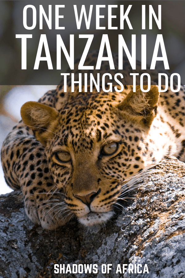 Are you heading to Tanzania for your African safari adventure? Here are all the things you need to do in Tanzania on your Africa trip! From the Serengeti to Zanzibar and Mt. Kilimanjaro! #Tanzania #africa #travel #safari #serengeti