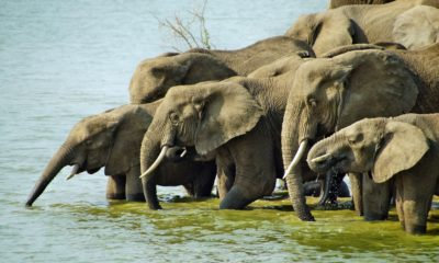 A weekend safari in Tarangire National Park - Tanzania
