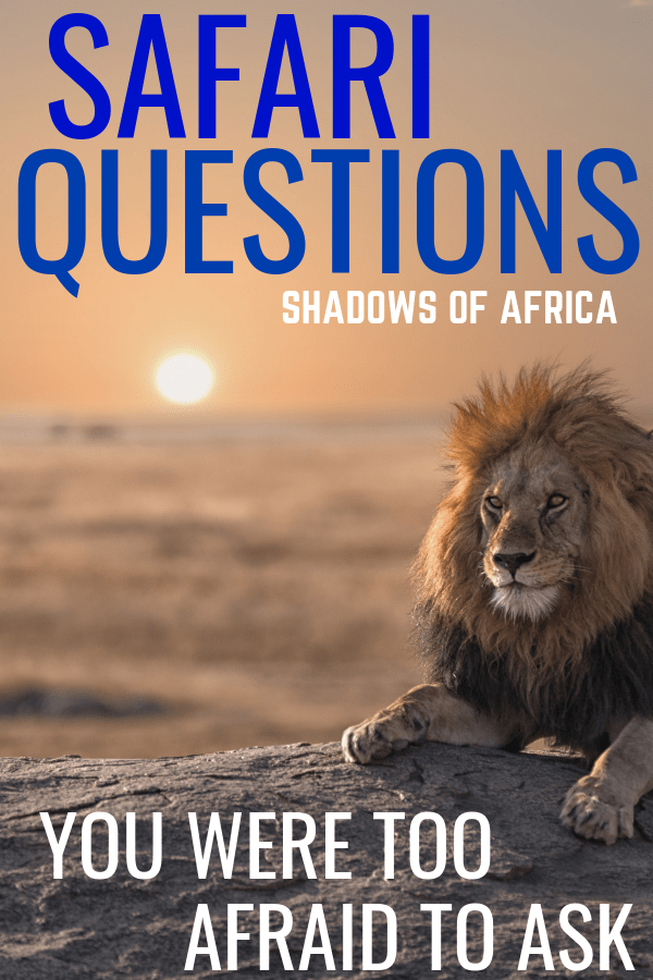 All the questions you were too afraid to ask when planning your African safari trip! Here's everything you need to know about planning your safari adventure in Africa! #africa #safari #adventure #travel
