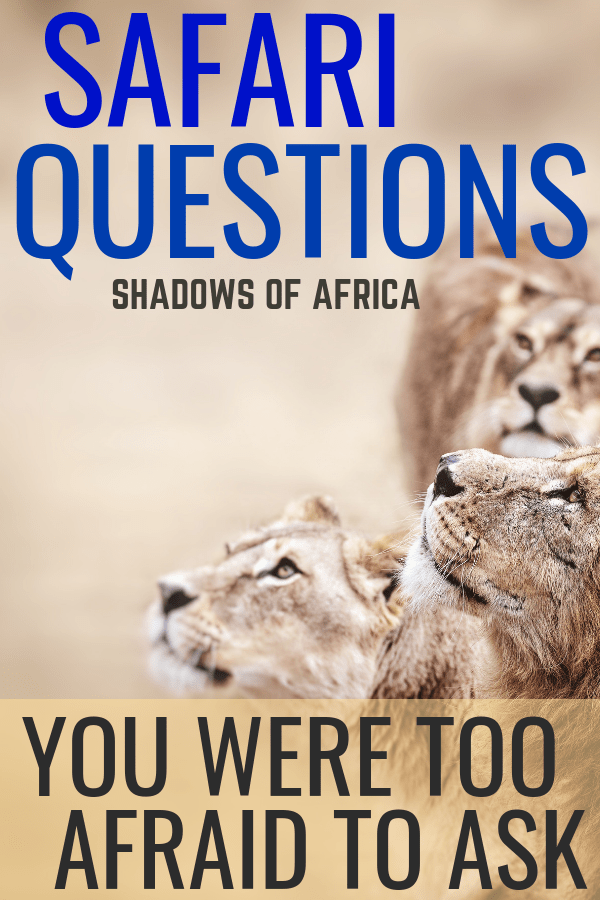 Do you want to go on a safari in Africa? Here are all the African safari questions you were too afraid to ask when planning your safari trip! #africa #safari #travel