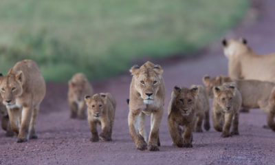 Ten Amazing Things to do in Serengeti National Park
