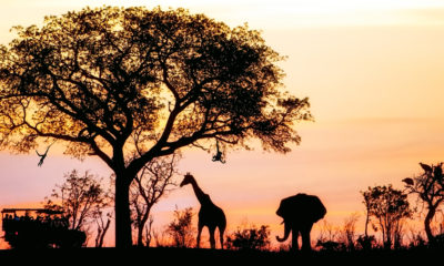Shadows of Africa's Top 10 Most Popular Safari Itineraries