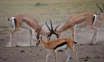 Ngorongoro Crater East – Lemala Camp