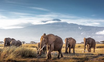 Crossing the Border on Safari: What You Need to Know