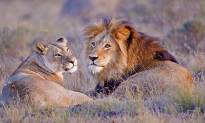 Celebrating the Lion King