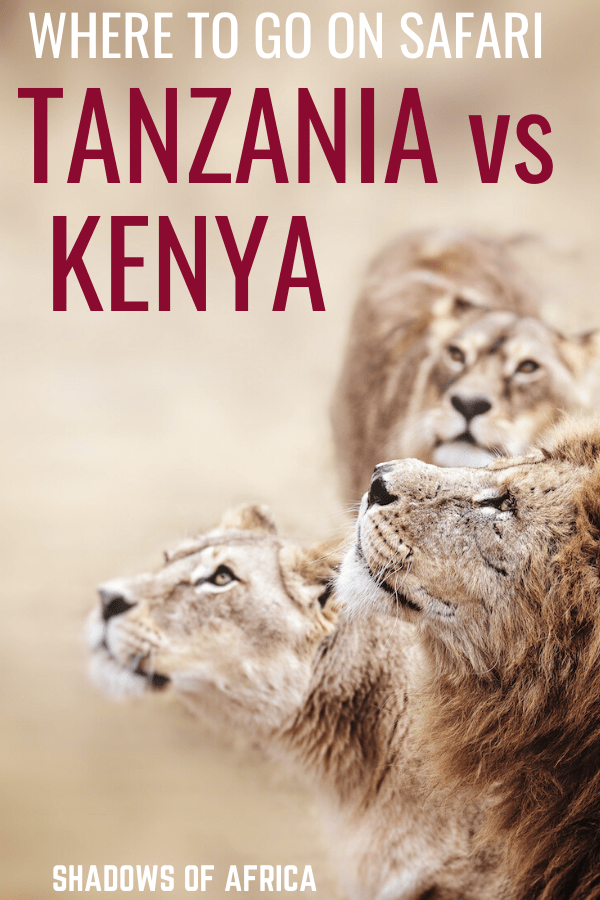Which African country is best for your safari? Tanzania or Kenya? Here's our guide to choosing your African safari! #tanzania #kenya #safari #africa #travel