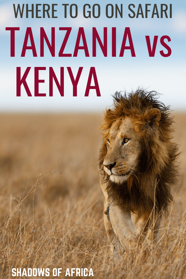Should you go to Tanzania or Kenya for your African safari? Here's how to plan your safari trip in Africa! #safari #tanzania #kenya #africa #travel