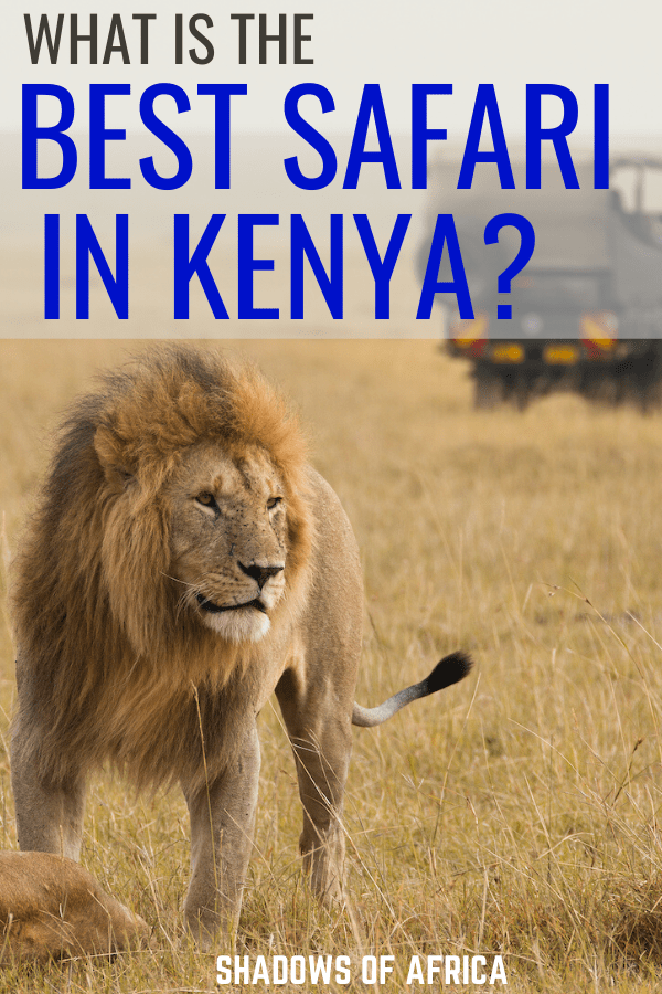 Which Kenya safari is the best? Here's how to plan the ultimate safari in Kenya for your trip to Africa! #kenya #africa #safari #travel