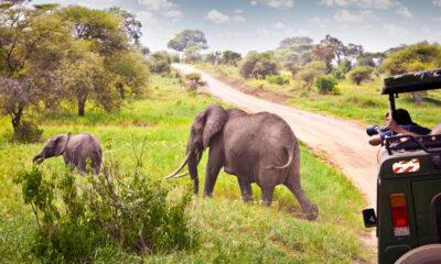 What camera to bring on safari