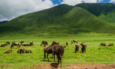 Group Tour Safari Great Migration - Calving Season - in Ndutu